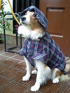 雨のちくもりでにわか雨