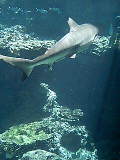 サメサメ!!